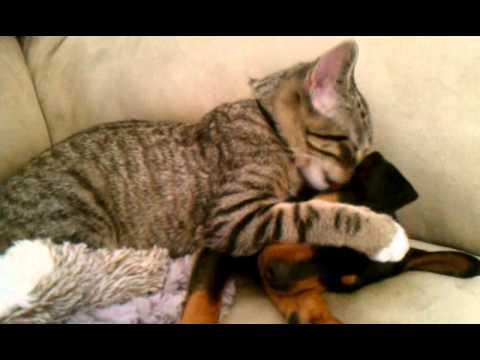 Xxx Mp4 Winston Kitty Takes Care Of Zeke Puppy 3gp 3gp Sex