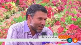 Iran Flowers greenhouse & packaging for export, Aman-Abad Arak greenhouse town صادرات گل