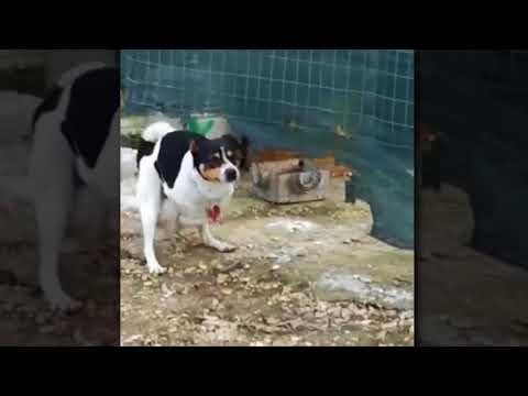 Dog and hen fuck Viral Video Whatsapp