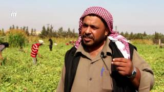 """ماذا حلَّ بـ """"البندورة الحورانية"""" أبرز المنتجات الزراعية في محافظة درعا"""
