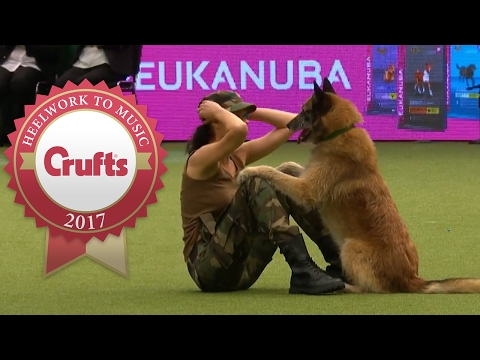 Amazing Dog Performs CPR, Squats and Press Ups in Heelwork To Music Routine | Crufts 2017