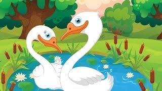 The Faithful Swan - Tamil Fairy Tales - உண்மையுள்ள அன்ன பறவை - குழந்தைகளுக்கான தமிழ் கதைகள்