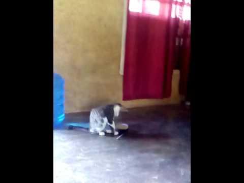 Xxx Mp4 Bokeb Abg Bodoh Kucing Bermain 3gp Sex