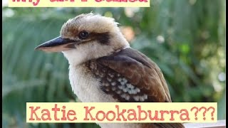 Why Am I Called Katie Kookaburra?