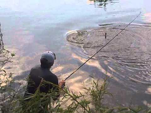 ловля толстолобика видео ютуб