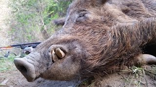War Pigs - California Public Land Bow Hunting For Wild Pigs