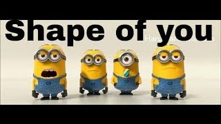 Shape of you minion version what's app status