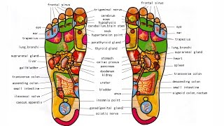 What is Foot Reflexology - Foot Massage And Benefits - How to do Foot Reflexology Step By Step