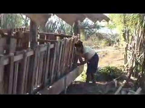 Modulo de cabras lecheras de doña Sigüenza