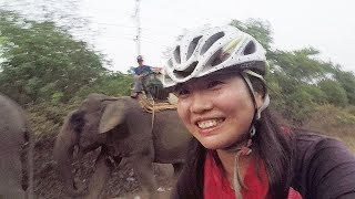 I cycle next to Elephant in Myanmar!
