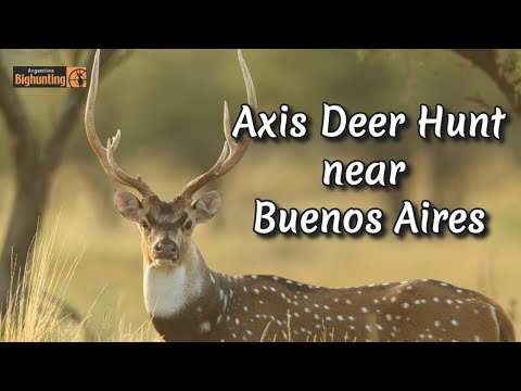 Argentina Big Hunting axis deer hunt.wmv