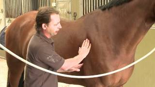 Assess and treat rear of withers, neck and girth in horses with Christian Langeder