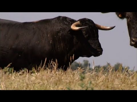 The bull the most powerful animal and symbolic of the earth