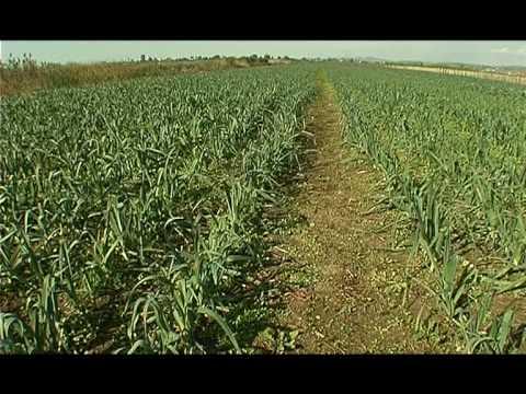 Emisioni AGROBIZNES Produktet bujqesore Shqiperia nivel i ulet eksporti