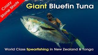 Spearfishing New Zealand Bluefin Tuna & Tonga with MJK