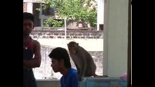 EK BANDAR HOTEL NAHI GHAR KE ANDHAR Funny VIDEO