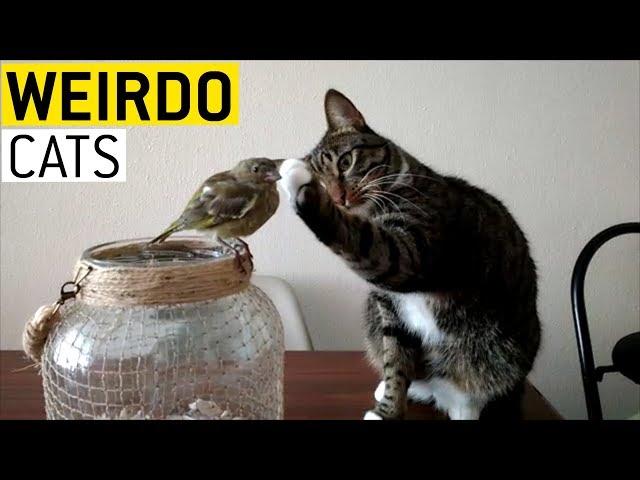 Cats Being Weirdos || JukinVideo