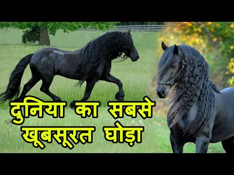 Frederic The Great, World का सबसे Beautiful Horse