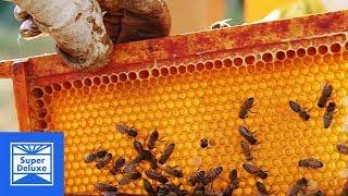 Honey Extraction | Stoned Mode