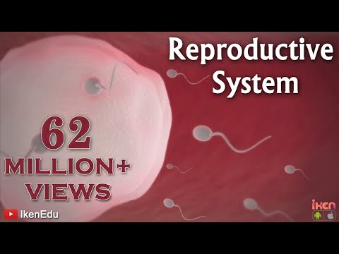 Learn About the Male and female Reproductive Systems