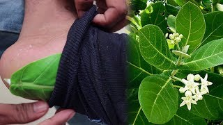 Only 2 Green Leaves Kills your Diabetes | Free Diabetes and Health