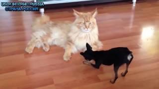 Funny Cat Videos (30+ Minutes)