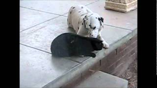 funny dog licking pussy