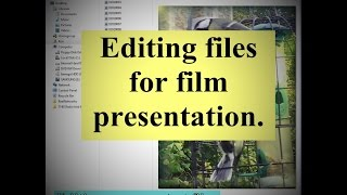 Great Tits film editing.