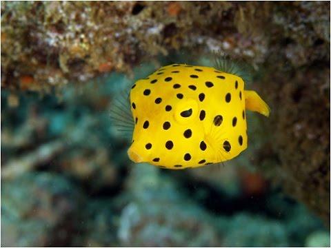 Los 7 peces más extraños del mundo realmente extraños