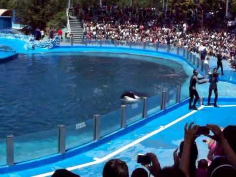 Show de Delfines y Orcas Mundo Marino San Clemente del Tuyu