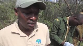 Treating an injured Bull Elephant in Tsavo