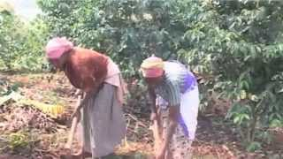 Kigali Kaffi visit to coffee farmers in Rwanda May 2014