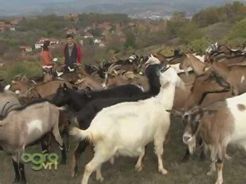 Farma koza Prekonoga
