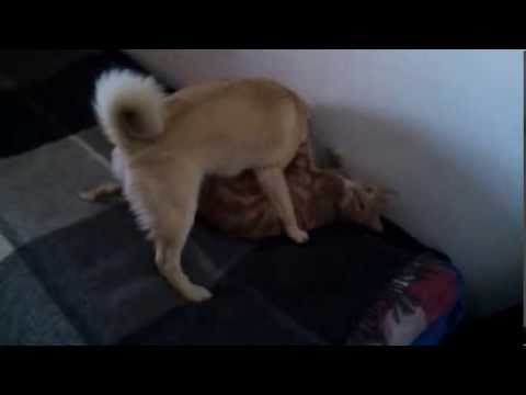 Xxx Mp4 My Dog And Cat Having Sex Caught On Tape CLICKBAIT 3gp Sex