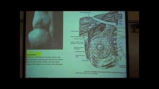 ANATOMY; LYMPHATIC SYSTEM by Professor Fink