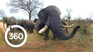 Elephants on the Brink   Racing Extinction (360 Video)