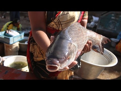 How To Make Cook Fish Curry Village Style || Country Food || Chepala Pulusu In Machilipatnam