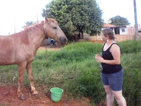 sexo animal garota molestando cavalo