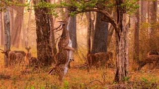 হরিণ এর সন্ধানে নিঝুম দ্বীপ এর গহীন জঙ্গলের ভিতরে যা ঘটলো..Nijhum dwip Bangladesh