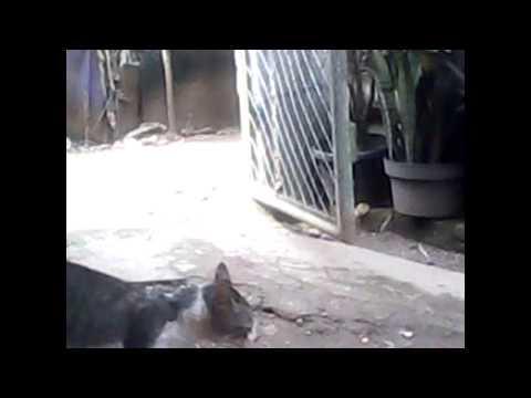 Animal sex video(Cat & Horse)