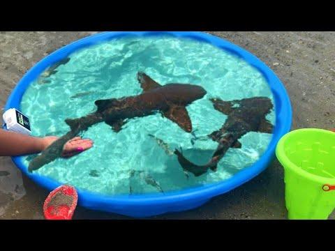 DIY Kiddie POOL FISH POND at BEACH