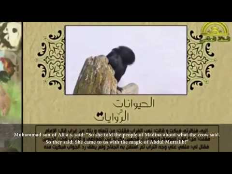 Xxx Mp4 Animals In Islamic Tradition The Creatures Of Allah The Crow 3gp Sex