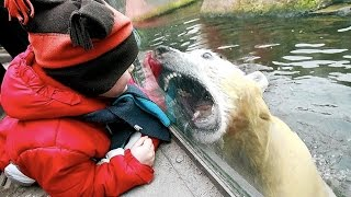 Funny Zoo Animal Surprise Attacks - Funny Animals Compilation