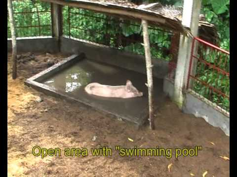 Natural piggery and poultry farm Carolina Naga City