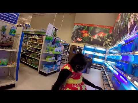 Xxx Mp4 Pet Monkey Spanky Shops At PetSmart Pet Store 3gp Sex