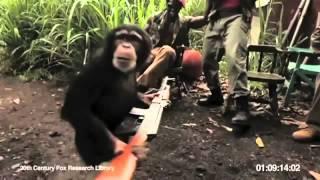 Dạy khỉ bắn súng Ak47