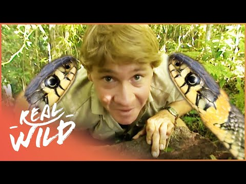 Xxx Mp4 The Ten Deadliest Snakes In The World With Steve Irwin Wild Things Documentary 3gp Sex