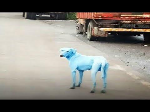 मुंबई में रातों रात अचानक नीले हो गए कुत्ते, क्या है इसकी वजह...