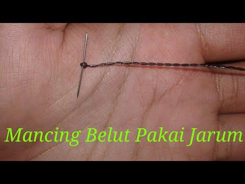 Trik Rahasia Mancing belut menggunakan jarum
