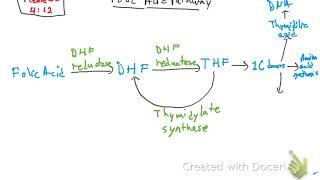 Folic Acid Pathway and Methotrexate